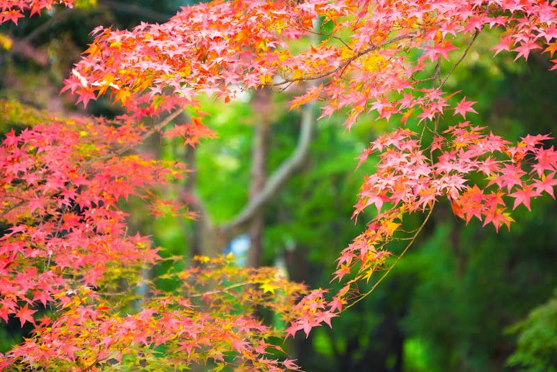 京都 紅葉 北野天満宮 写真5