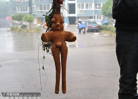 人形植物3