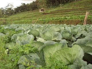 Harga Sayur Mayur Di Kota Dan Kabupaten