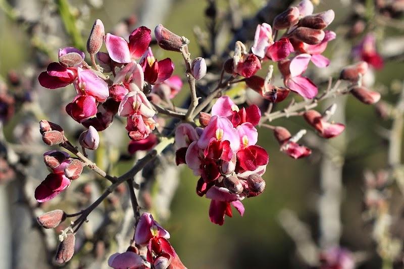 Цветы в национальном парке Органный Кактус