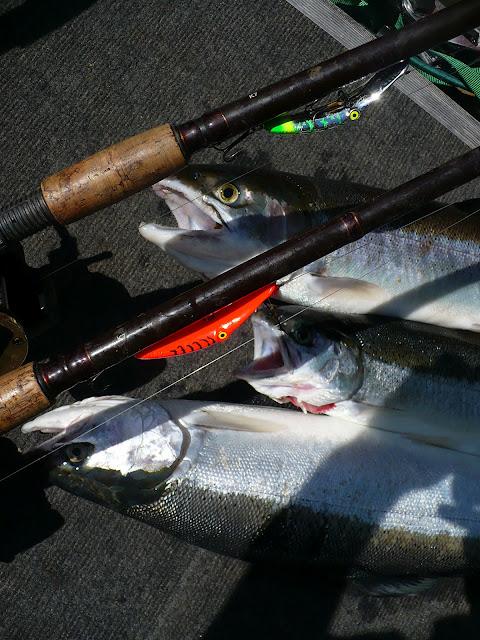 Summer Run Skamania Steelhead Fishing Guide Trips