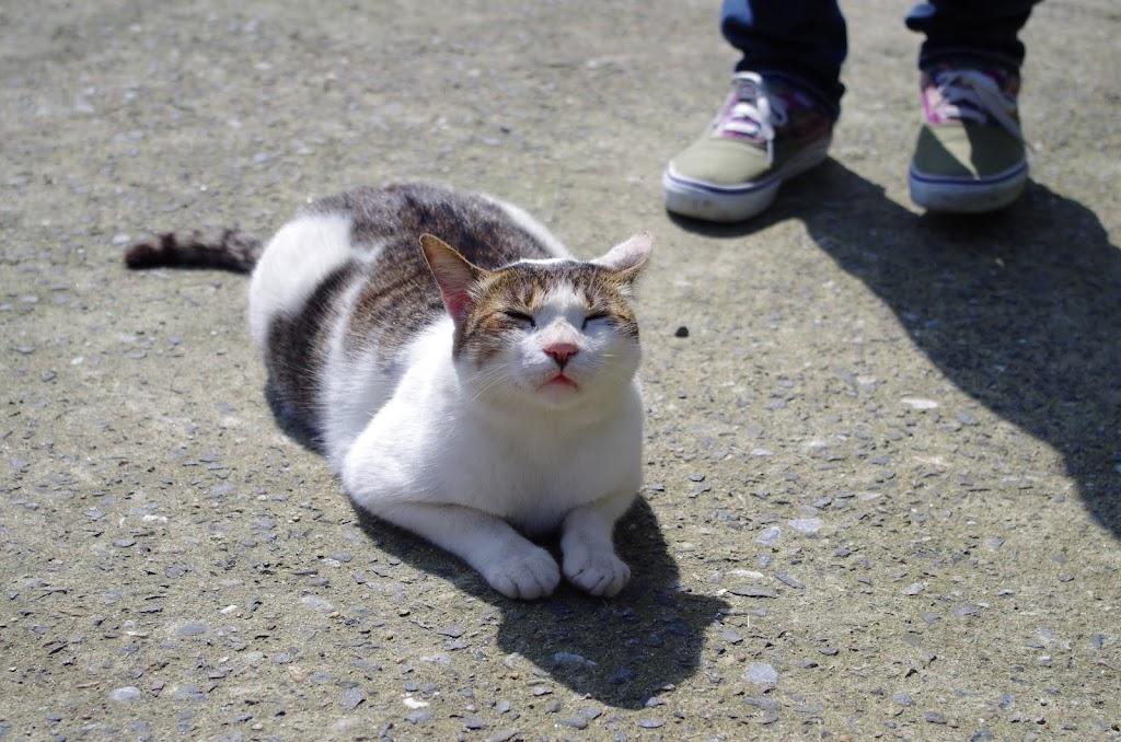 轉角遇見 貓   侯硐