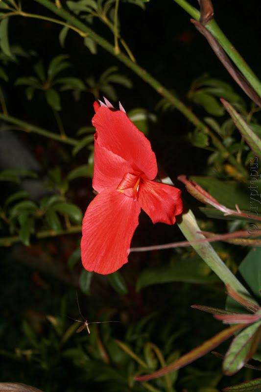 Futur jardin d'orchidées!!! IMG_3630