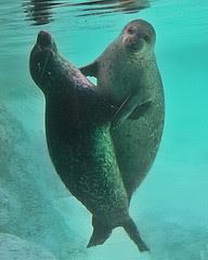 sea_mammal.jpg