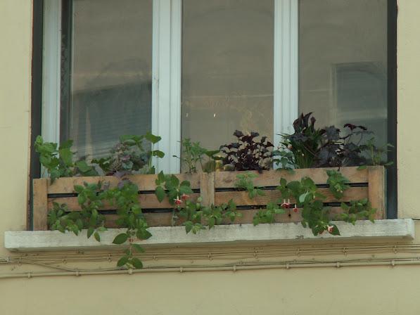 Jardinières en pallette avec mur végétal incorporé PICT0086