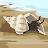 Island Princess 501 avatar image