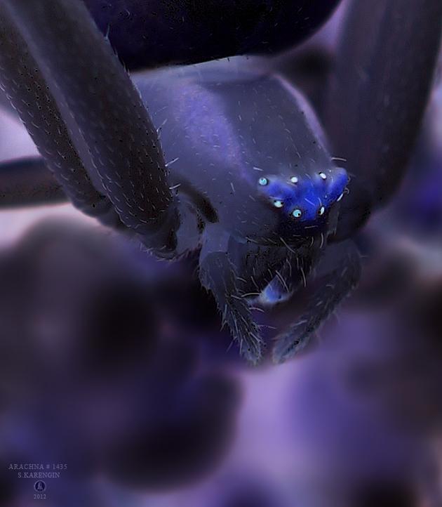 photo, фото, арахна, photography, макро, macro, паук, arachnida, spider