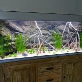Ingerichte aquaria