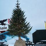 Juletræ på havnen