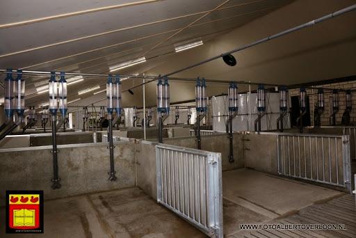 Open dag varkensbedrijf molenpas overloon 29-06-2013 (10).JPG