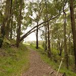 Track leading to Mt Sugarloaf car park (324383)