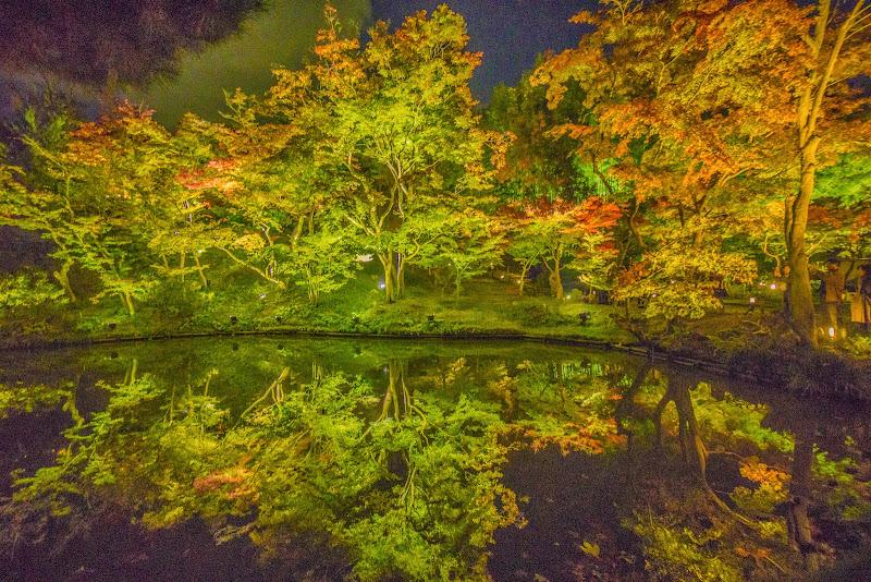 京都 高台寺 紅葉 ライトアップ 写真5