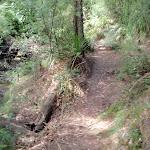 Governor Phillip track (126505)