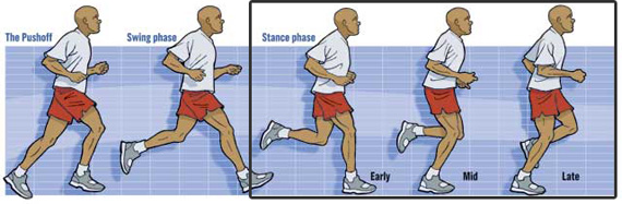 Stance Phase of Running