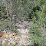 Track beside Erskine Creek (144462)