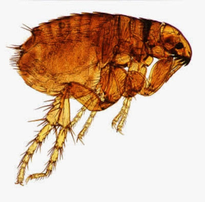 bristol pet flea control