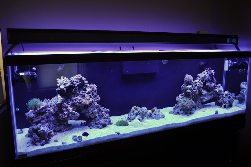 Show Me Pics Of Your Aquascaping Reef Central Online Community