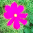 Jackie H avatar image