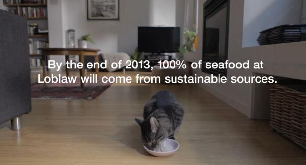 "The House Cat ""Norman"" is an Eco-Warrior for WWF"
