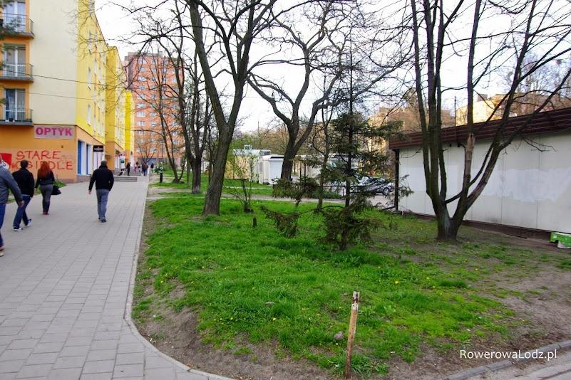 Droga dla rowerów ma być puszczona jakoś między tymi drzewami.