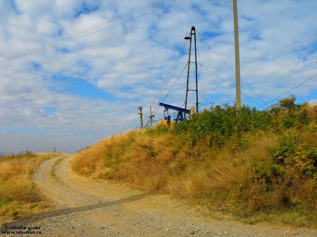 dealuri prahovene cu sonde de petrol si vita-de-vie