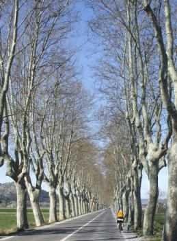 Allee in der Nähe von Aix-en-Provence
