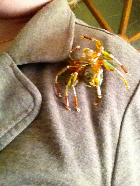 Zelf een spin als broche maken