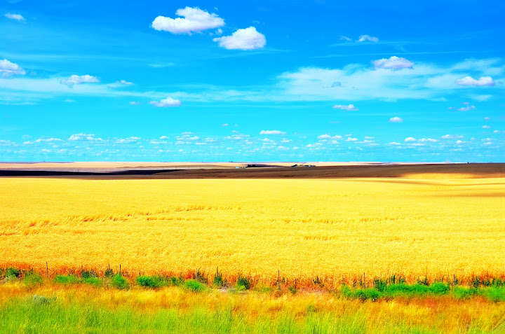 Farm view by I-90 West (MP 215), Ritzville, Washington, USA