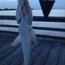 Ocean View Fishing Pier's profile photo