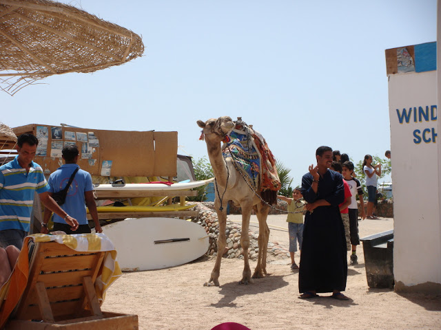 فى مصر الرجل تدب مكان ماتحب ( خاص من أمواج ) 100606-095834-s