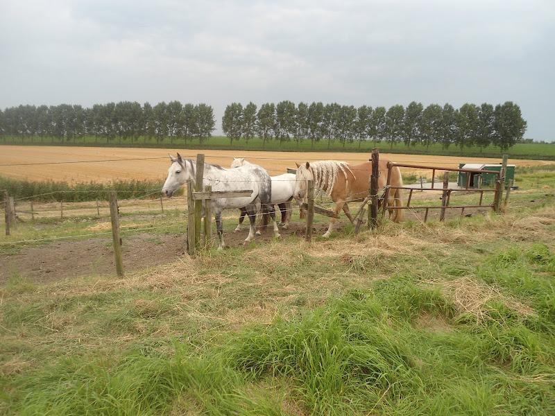 Omloop Goeree-Overflakee (NL) 110/80km: 30-31 août 2013 DSC03142