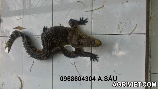 Agriviet.Com-DSC_1594.JPG