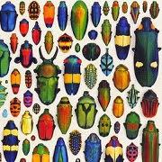 К чему снится жук?