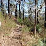 Hillside walk (202456)