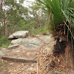 Grass trees on Graves Walk (227053)