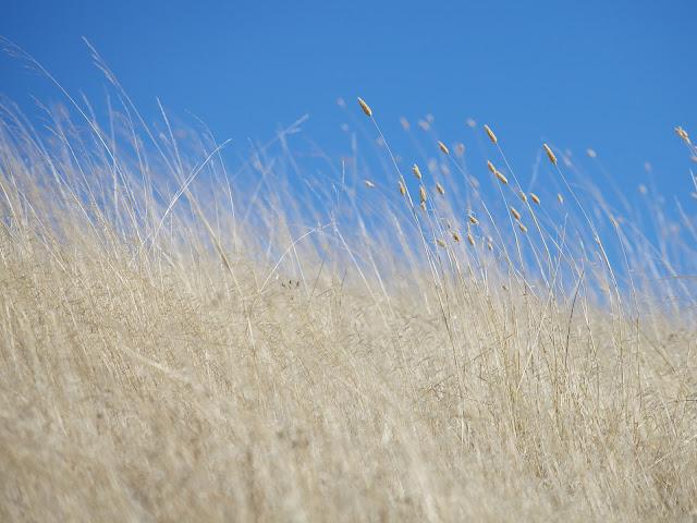 Annual Grass