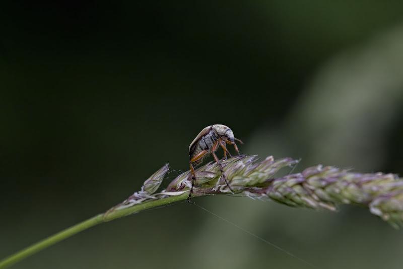Bugs 1, 2, 3