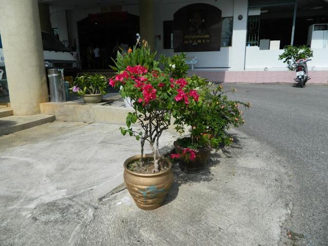 Пхукет и жизнь на острове. DSCN0460