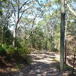 Walking along the rocky trail near Bradfield Rd (346906)