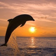 К чему снится дельфин в море?