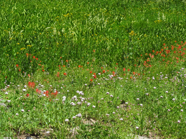 field with stripes of color from blooming flowers
