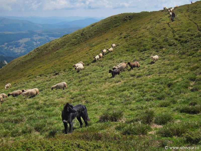 2013.08.31 - Ciucas - Creasta Zaganu – Gropsoarele