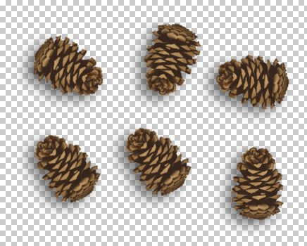 pinecones_sue.jpg