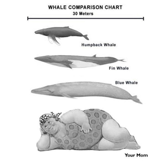 funny your mom is a whale chart