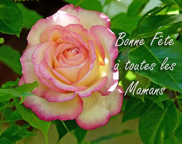 Bonne fête aux mamans dans Coutumes & traditions Rose1440306