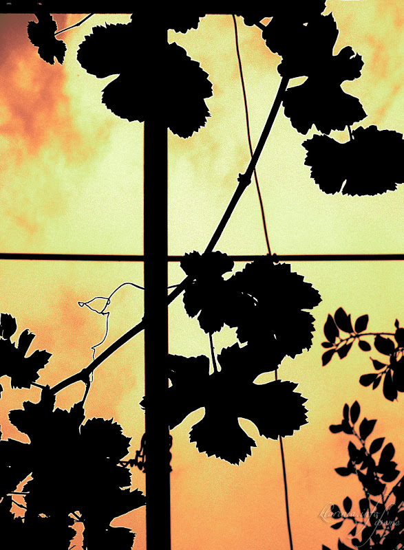 Закат в Ташкенте, виноград фото