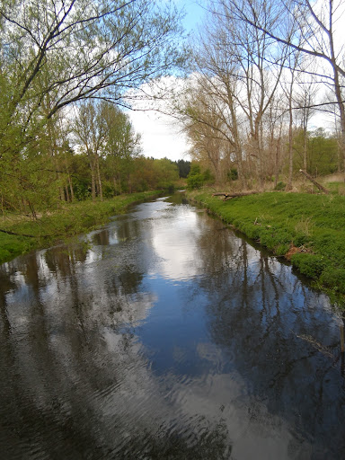 The Little Ouse at Thetford Forest