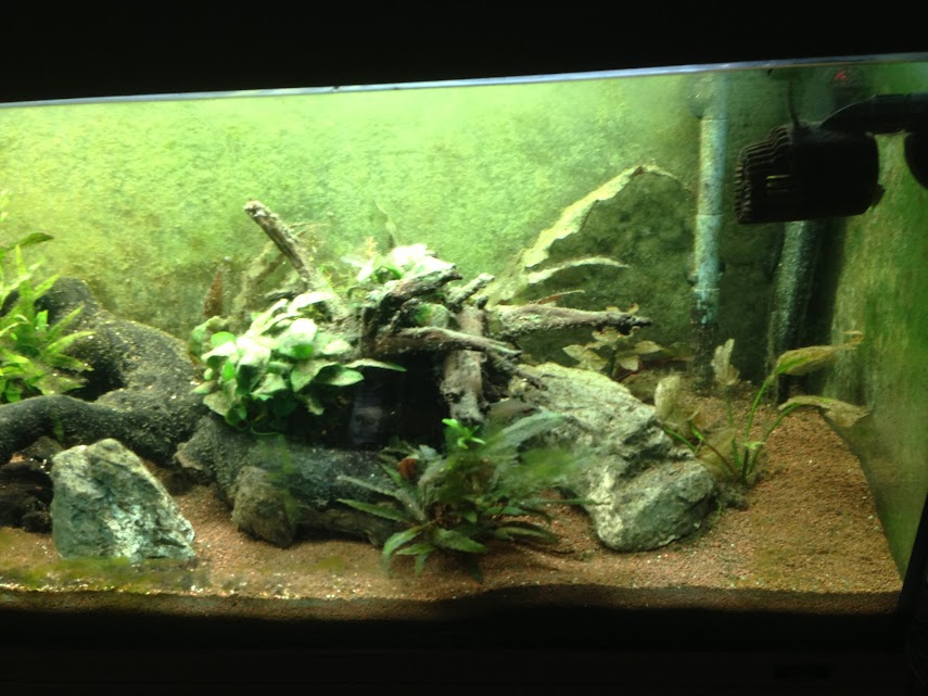 Ma petit histoire Aquariophile de 2009 à aujourd'hui  Iphone+076