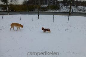 De honden spelen in de sneeuw