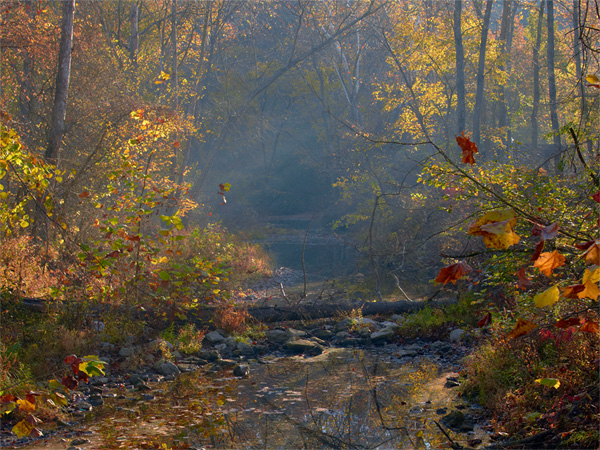 Montauk State Park - Small tributary steam, Fall 2011